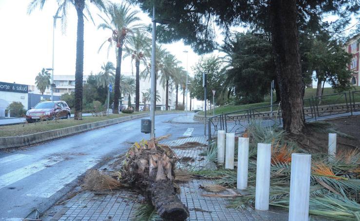 Incidencias de la borrasca 'Ana' en Extremadura