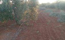El nuevo regadío de Tierra de Barros ampliará su perímetro hasta 46.252 hectáreas