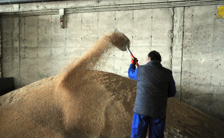 El sector del cereal no logra frenar la pérdida de hectáreas y producción
