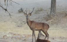 Europa avala la caza en Monfragüe por su papel en la conservación del medio