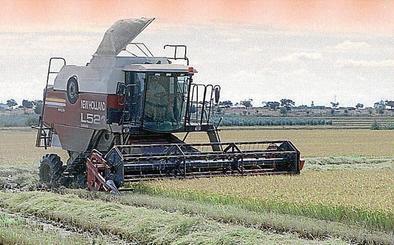 Apag pide que no se penalice a los agricultores de arroz que reduzcan el cultivo por la sequía