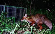 Cáceres acoge en mayo un curso de formación en control de predadores