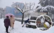 La nieve vuelve a retrasar la floración del cerezo en el Jerte
