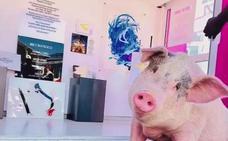 El cerdo con más arte