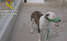 Condenado a dos años de cárcel el dueño de varios perros que mataron a un jubilado