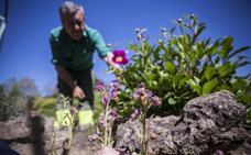 La revolución de las orquídeas