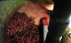 El aguardiente de cereza del Jerte, mejor espirituoso de 2017