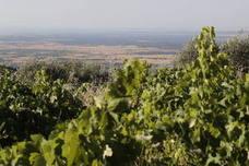 El plazo para asegurar la uva de vino frente al riesgo de pedrisco finaliza este lunes