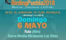 Puebla de Alcocer promueve rutas ornitológicas y talleres medioambientales en la III BirdingPuebla