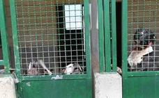 Un menor, herido de gravedad tras el ataque de dos perros de raza peligrosa en Vizcaya
