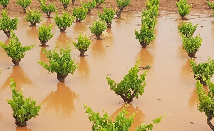 La tormenta causa daños en olivares y viñedos de Arroyo de San Serván