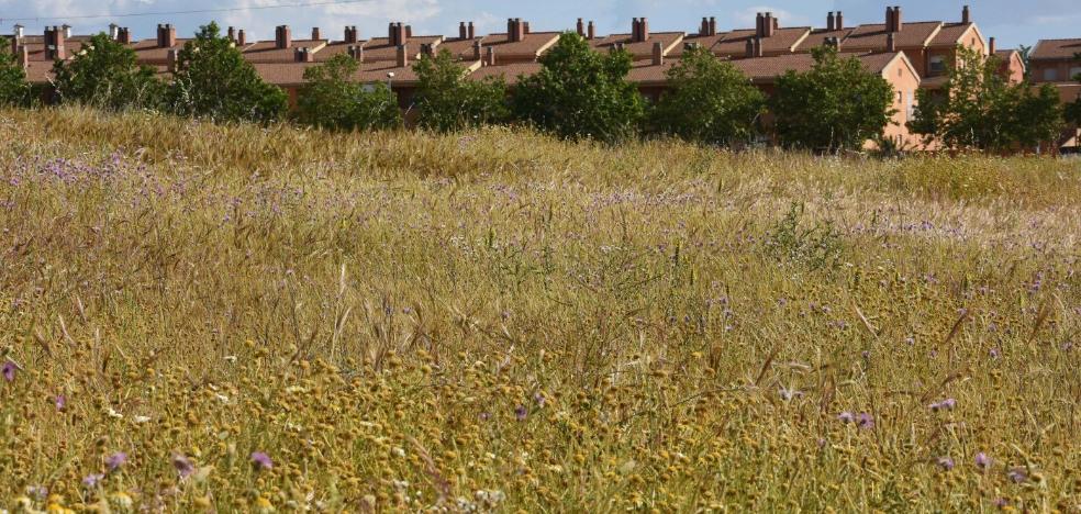Los bomberos de Badajoz piden a los propietarios de 350 solares que desbrocen