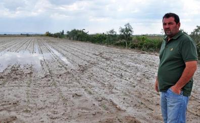 El Ministerio amplía la rebaja fiscal del tomate a la provincia de Cáceres