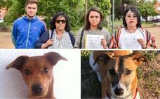 Dos vecinas de Valdepasillas denuncian que sus perros murieron envenenados
