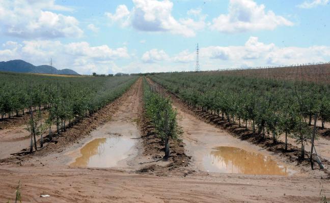 El olivar ya es el segundo cultivo  con más hectáreas en regadío