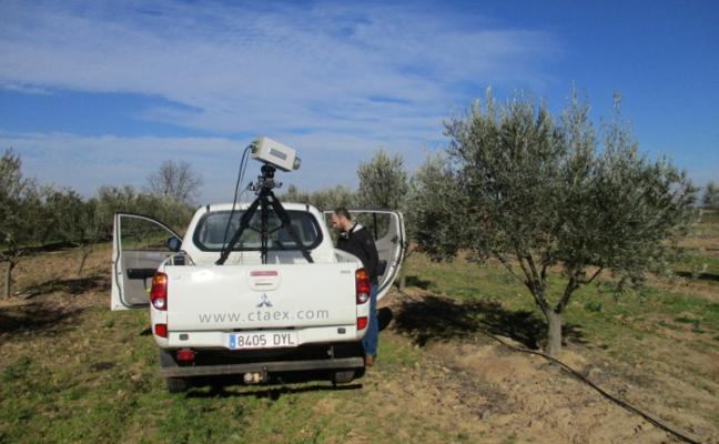 Imágenes hiperespectrales para saber la producción y la salud del olivar