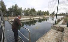 Comienza la transformación en regadío de 1.200 hectáreas en Navalvillar, Logrosán y Madrigalejo