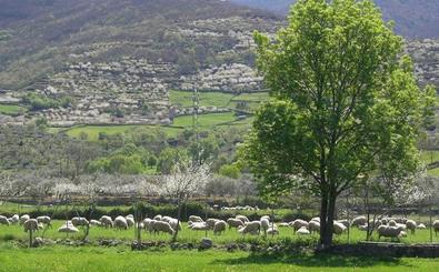 Publicado el decreto por el que se declara la transformación en regadío en el Valle del Ambroz