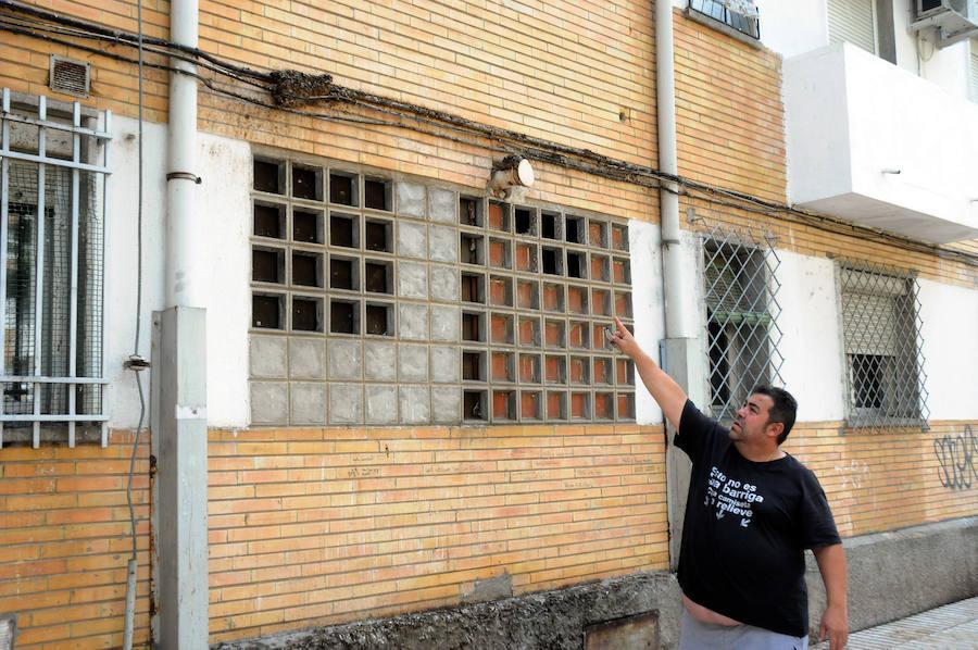 Las palomas, un problema de salud pública para algunos vecinos de Mérida
