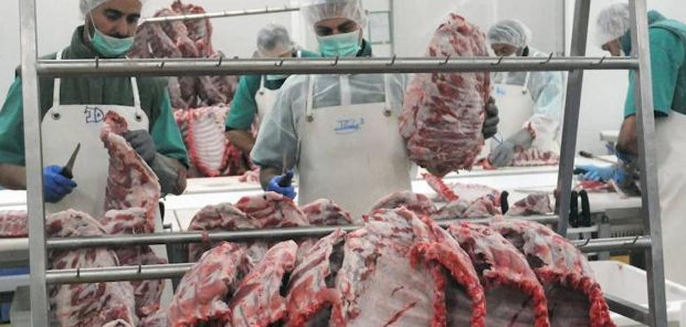 El gran matadero de ibérico estará en la comarca de Zafra