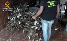 Tres detenidos en Cáceres y Coria por robar 140 trofeos de caza mayor