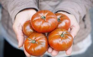 Ctaex llevará más trabajos que nadie al Congreso del Tomate