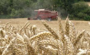 Apag estima que la cosecha de cereales de invierno superará las 500.000 toneladas