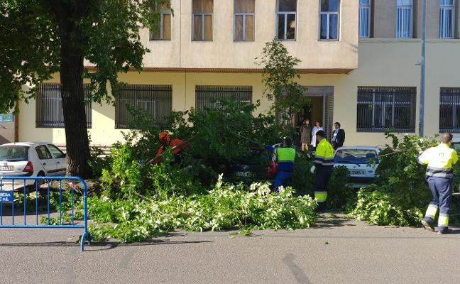 Cae una rama sobre un coche en Ronda del Pilar