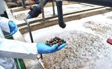 El sector agrario ve «injusta» la decisión de EEUU de incrementar los aranceles a la aceituna