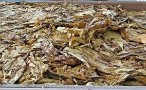 La venta ilegal de hoja de tabaco gana terreno a las cajetillas de contrabando