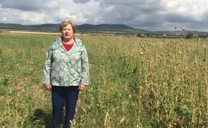 El PP insiste en su rechazo a los olivos en La Sierrecilla de Don Benito
