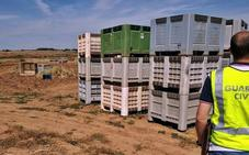 Sorprenden sin contrato en dos fincas de Badajoz a 46 trabajadores, cuatro de ellos menores