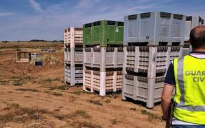 Identifican a cuatro menores de entre 8 y 17 años trabajando sin contrato en una finca de Badajoz
