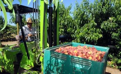 APAG Extremadura lamenta la especulación en los precios de la fruta de hueso
