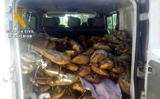 La operación por la venta de jamones caducados se originó en una empresa de Malpartida de Plasencia