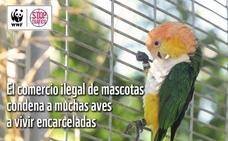 España, un paraíso para los traficantes de especies protegidas