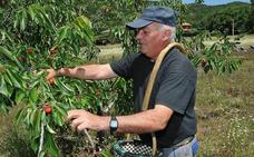 García Seco trasladará al Ministerio de Agricultura las peticiones de los cereceros del Jerte