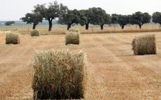 Apag Asaja prevé positiva la campaña de cereal de invierno pese a los bajos precios