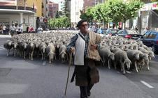 Mil doscientas ovejas extremeñas cruzan Soria para reivindicar la trashumancia