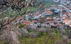 El almendro, un cultivo en alza en Extremadura