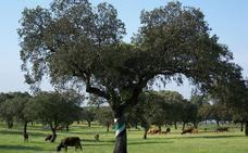 El Ministerio y las organizaciones agrarias defienden una PAC común y financiada «adecuadamente»