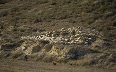 Los seguros agrícolas cubren la falta de pasto derivada de la sequía