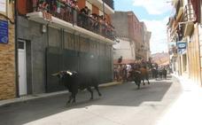 Los astados de Pablo Mayoral y Guadajira efectúan el último encierro en Moraleja en dos minutos y medio