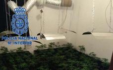 La Policía interviene más de 400 plantas de marihuana en Badajoz