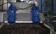 Europa defenderá a los productores de aceituna negra de los aranceles de EEUU