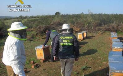 Detenido un vecino de Caminomorisco por robar colmenas en las comarcas de Las Hurdes y Gata