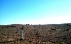 8,5 millones para subvencionar actuaciones agroforestales en Extremadura