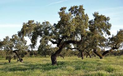Cicytex participa en la jornada de presentación del grupo operativo nacional Quercus Seleción