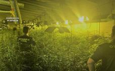 Desmantelada en Casas de Don Gómez una «sofisticada» plantación de marihuana con 810 plantas