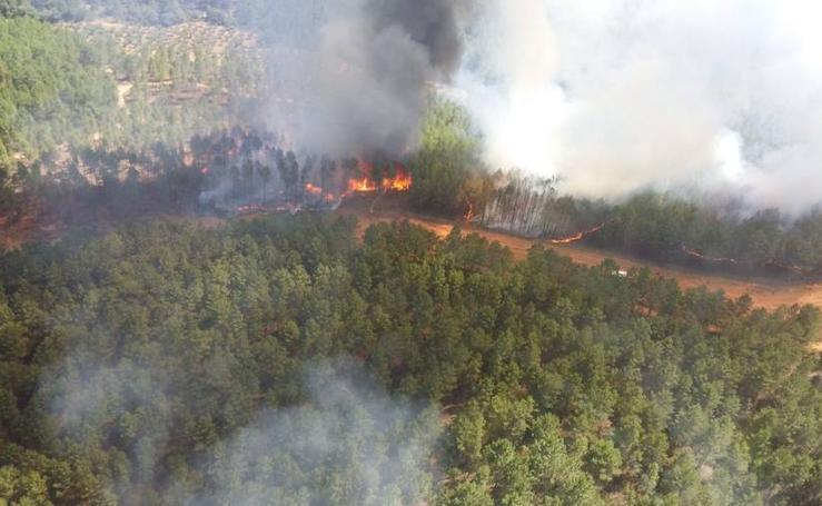 Imágenes del incendio originado en una zona de pinar en Valverde del Fresno